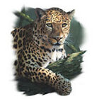 LEOPARD T SHIRT ALL SIZES AND COLORS (376)