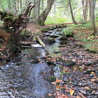 OWN 46.90 ACRES + - IN NORTHERN MAINE***