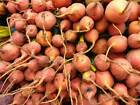Detroit Golden Beet Seeds by Zellajake Many Sizes Non-Gmo Sprouts or Garden #10