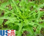 USA SELLER (Wild Harvest) Wild Lettuce 10-40 seeds HEIRLOOM NON-GMO