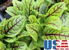 USA SELLER Red Veined Sorrel 200-600 seeds HEIRLOOM NON GMO