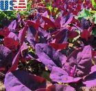USA SELLER Purple Passion Spinach 25-200 seeds HEIRLOOM NON GMO