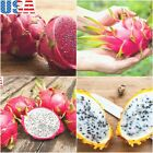 USA SELLER Dragon Fruit Mix (Red, Yellow, White) 20-160 seeds HEIRLOOM NON-GMO