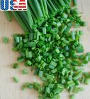 USA SELLER Evergreen Bunching/Green Onion 200-1600 seeds HEIRLOOM NON GMO