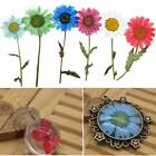 Внешний вид - DIY Epoxy 5 Pcs Pressed Real Flowers Dried Daisy Floral Craft Phone Case DIY