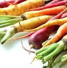 Rainbow Blend Carrot Seeds Pick Your Packet Size Free Shipping Heirloom #258