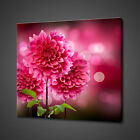 DAHLIA PINK PURPLE FLOWERS CANVAS PICTURE PRINT WALL ART HOME DECOR DESIGN