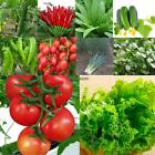 Various Home Gardening Vegetable Balcony Seed Vegetables Potted Plants BRCE