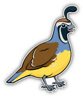 California Valley Quail Bird Car Bumper Sticker Decal  -     3'', 5'' or 6''