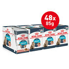 Royal Canin Urinary Care Gravy 48 x 85g Wet Cat Food Adult Healthy Ideal Weight
