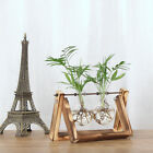 Creative Hydroponic Plant Transparent Vase Wooden Frame Coffee Shop Room Decr