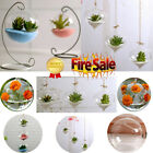 New Home Garden Clear Glass Flower Hanging Vase Planter Terrarium Container US