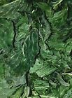 Organic Dried Mint Leaf - Mentha arvensis - Apothecary Wicca Japanese Peppermint