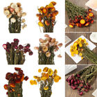 Uk Natural Dried Flower Bouquets Wedding Home Diy Floral Art Home Decoration