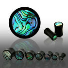 Pair Organic Horn Abalone Inlay Ear Saddle Plugs Tunnels Earlets Gauges