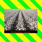 Cotton Seeds 1600 for $14.99 ~~Free Shipping. ~~Other Quantities In My Store~~