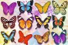 New Exquisite Beauty Butterflies Poster