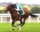 FRANKEL RIDDEN BY TOM QUEALLY 02 (HORSE RACING) PHOTO PRINT
