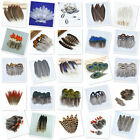 Wholesale 10-100pcs natural pheasant feather a variety of st