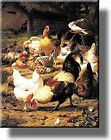 Animal Farm of Chickens Picture on Stretched Canvas, Wall Art Decor, Ready to Ha