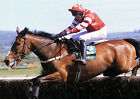 FLORIDA PEARL RIDDEN BY RICHARD JOHNSON 01 PHOTO PRINT