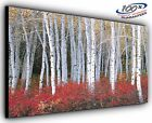 Forest Light Panoramic Canvas Print Modern Art 4 Sizes to Choose - Ready to Hang