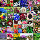 Various Rare Rose Tulip Flower Seeds Ideal Garden Potted Plant Ornamental Decor
