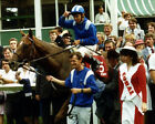 NASHWAN RIDDEN BY WILLIE CARSON 5 TIMES CHAMPION JOCKEY 03 MUGS AND PHOTO PRINTS