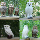 Fake Artificial Owl Bird Feather Realistic Taxidermy Natural 12cm-27cm PICK