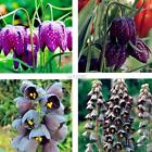 50pcs Fritillaria Seeds Bonsai Heirloom Fritillaria Meleagris Plant DZ88