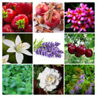 Fragrance Oil For Burning, Diffusing, Candle and S