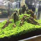 Aquarium Plant Seeds Fish Tank Aquatic Water Grass Foreground Easy Plants 5g New