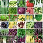 VARIETIES vegetable Seeds Heirloom NON-GMO lettuce Goabean Eggplant bean 121-152