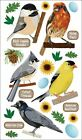 U CHOOSE Sticko TOP US BIRDS Stickers Egg Cardinal Woodpecker Blue Jay Dove Crow