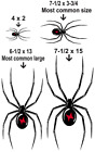 BLACK WIDOW SPIDER VINYL GRAPHIC CAR DECAL/STICKER - CHOICE OF 4 COLORS & 2 SIZE