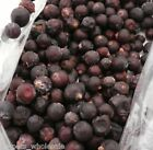 DRIED JUNIPER BERRIES 100g, 250g, 500g &1kg AVAILABLE PARROTS LOVE THEM