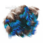 Free shipping Wholesale all kinds different beautiful natural pheasant feather