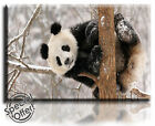 Wall Art Canvas Picture Print of Panda Bear on Tree  Framed  Ready to Hang