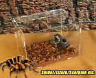 Reptile insect cage Breeding Box tarantula lizard Geic snake amphibian frog LOT