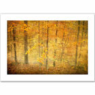 ArtWall 'Lost in Autumn' by David Liam Kyle Photographic Print on Canvas