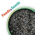 Premium Niger Seed High Energy Wild Bird...