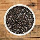 Premium Niger Seed High Energy Wild Bird Seed  Fast FREE Shipping,
