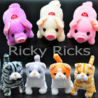 1 Walking Dog Pig Cat Toy Plastic Piggy Kitty Furry Cute Mechanical Plush Gift