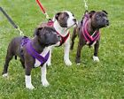 Trixie Fleece Lined Padded Dog / Puppy Harness Sm Various Colours