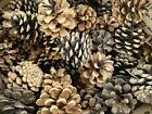 "Austrian Pine Natural Real Pine Cones 2""-3"" Lots Crafts Decor Wreaths Christmas"