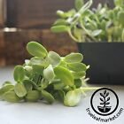 ORGANIC SUNFLOWER SEED IN SHELL - BLACK OIL - SPROUTING, MICROGREENS -SUN FLOWER