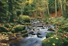New Forest Stream 8 Sheet Woodland Wall Mural Giant Wall Mural