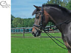 busse fully elasticated training rein / bungee horse / pony free p&p