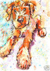 LAKELAND TERRIER Dog PRINT from an Original Watercolour Art Painting by Josie P