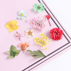 3D Dried Flower Real Preserved Floral Leaf Mixed Nail Art DIY Nail Supplies New